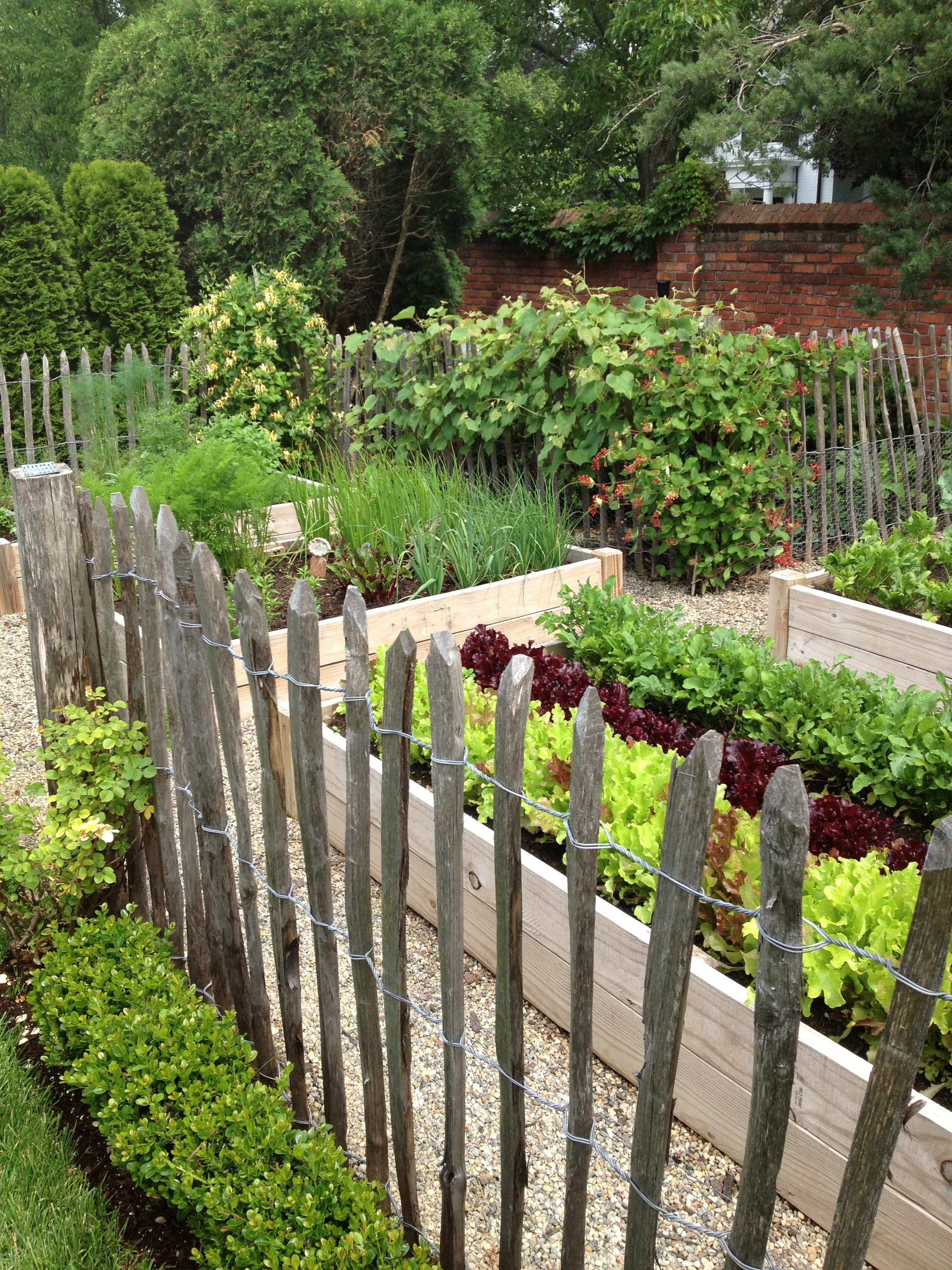 Vegetable garden inspiration angel food garden for Veggie patch design