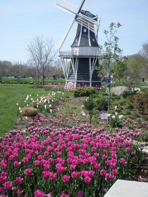 Windmill Island Gardens Holland Mi Angel Food Garden